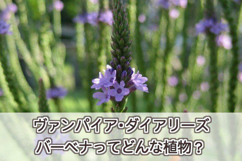ヴァンパイア・ダイアリーズのバーベナってどんな植物?